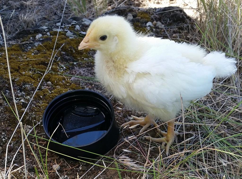 Shantie-makeshift-water-bowl_061915